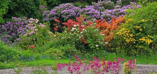 Ross Priory Special Open Day For Scotlandu0027s Gardens
