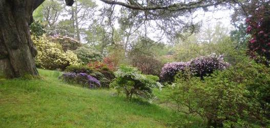 Garden Heritage Walk at Glenarn to explore the history on the ground of the house and garden