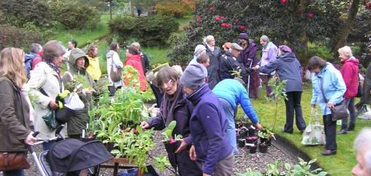 GLENARN SPECIAL PLANT SALE AND OPEN DAY