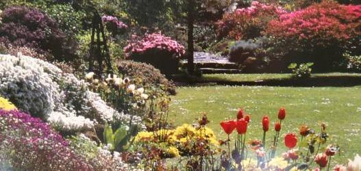 AN CALA OPEN FOR THE FESTIVAL OF RHODODENDRONS